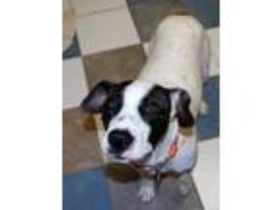 Adopt Dayna a White - with Black Pointer / Mixed dog in North Myrtle Beach