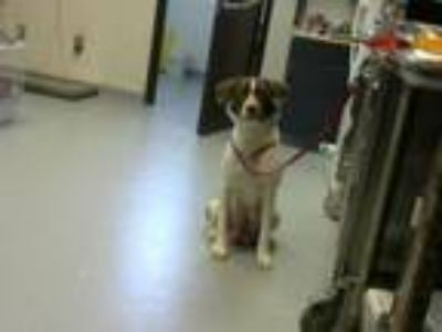 Adopt LOLA a Border Collie, Mixed Breed