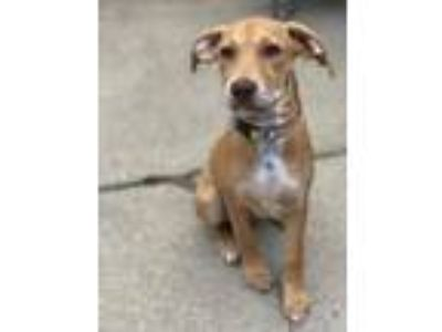 Adopt Sparkle a Mixed Breed