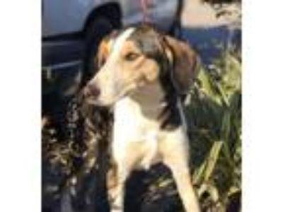 Adopt Mariah a Husky, German Shepherd Dog
