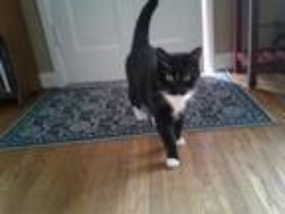 Craigslist - Animals and Pets for Adoption Classified Ads ...