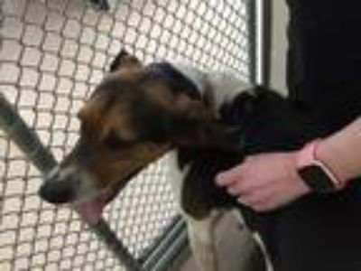 Adopt Dixie a Hound (Unknown Type) / Mixed dog in Tiffin, OH (25331639)