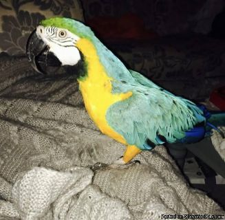 Macaw Birds now available to go for new home