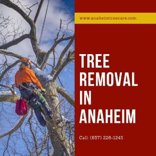 Tree Removal Anaheim, CA