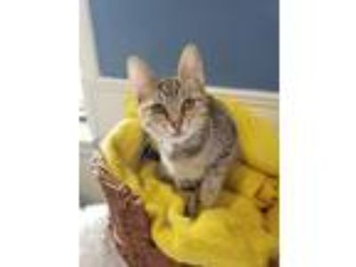 Craigslist - Animals and Pets for Adoption Classifieds in