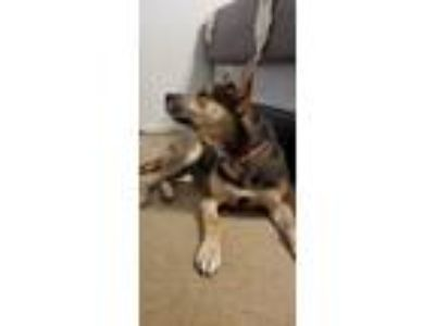 Adopt Rini a Black - with Tan, Yellow or Fawn Hound (Unknown Type) / Mixed dog