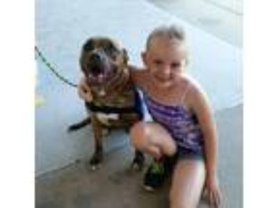 Adopt Gretta a Brown/Chocolate American Pit Bull Terrier / Mixed dog in