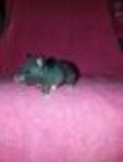 Toshiba Hamster Small & Furry