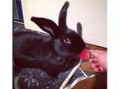 Adopt Rory a Bunny Rabbit