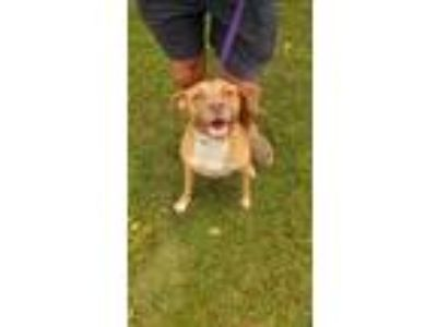 Adopt Buster Brown a Hound