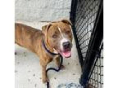 Adopt Garvey a Brown/Chocolate Mixed Breed (Medium) dog in Jacksonville