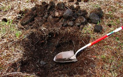 Dig Holes for Trees
