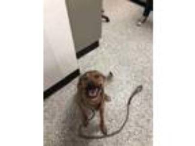 Adopt Emma a Tan/Yellow/Fawn Shepherd (Unknown Type) / Mixed dog in New Castle