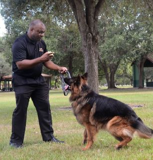 Private On Leash Dog Training Consultants In Florida