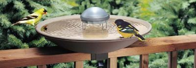 wholesale bird products