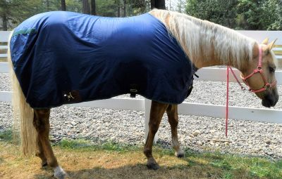 State Line Tack Lightweight Stable Sheet Size 80