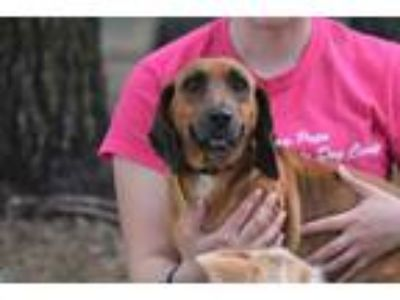 Adopt Lilly a Red/Golden/Orange/Chestnut Dachshund / Mixed dog in Union Dale