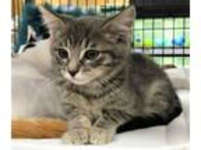 Adopt Morty (js) a Tabby