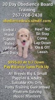 Puppy Dogs For Sale Classifieds In Long Island City Ny