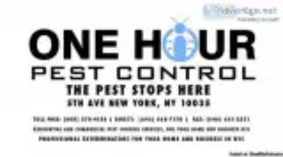 Hour Pest Control Experts