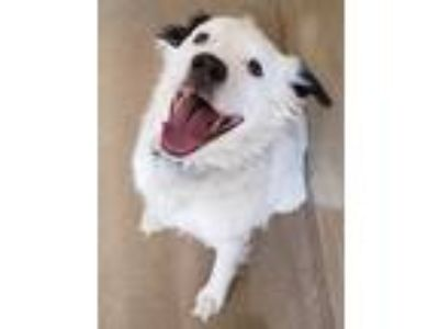 Adopt Marble Cake a Border Collie