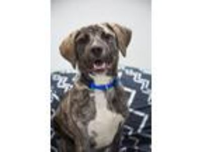 Adopt Macks a Mixed Breed