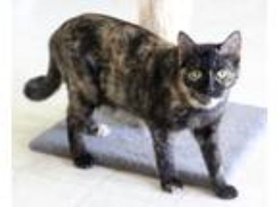 Adopt Mia a Tortoiseshell Domestic Shorthair (short coat) cat in Dalton