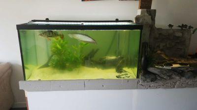 120g aquarium