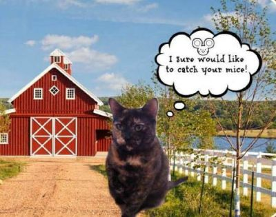 Need Barn Cats ... do you have rats and mice (FREE)