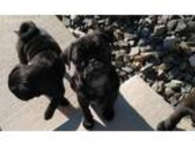 Craigslist Dogs For Sale Or Adoption Classified Ads In Cheyenne Wyoming Claz Org Popular hotels close to wyoming state museum include the historic plains hotel, microtel inn & suites by wyndham. claz org