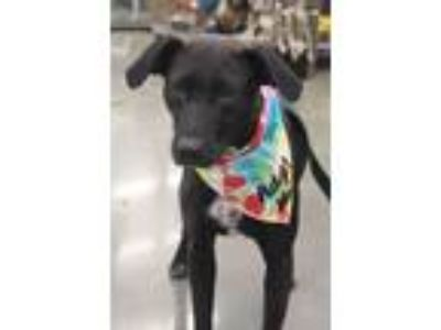 Adopt Esther a Labrador Retriever