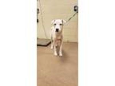 Adopt Selina* a White Border Collie / Mixed dog in Anderson, SC (25657525)
