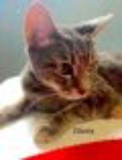 Gloria Tabby Cat