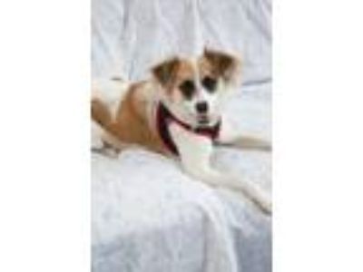 Adopt Trixie a White Mixed Breed (Small) / Mixed dog in Westhampton