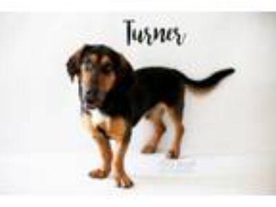 Adopt Turner a Basset Hound, German Shepherd Dog