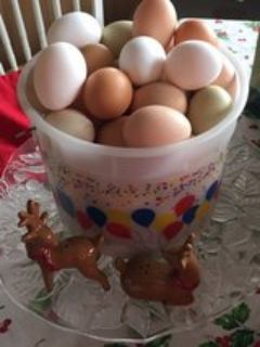 Fresh Chicken Eggs For Sale