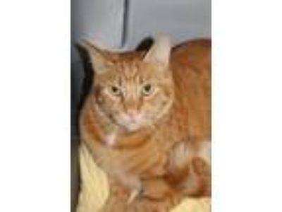 Cat - For Sale Classifieds in Elizabethtown, Kentucky - Claz org