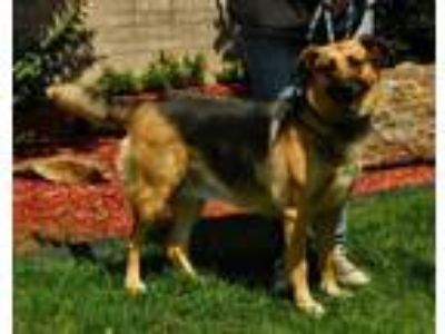 Adopt Julianne a German Shepherd Dog / Mixed dog in Little Rock, AR (25470097)