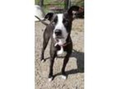 Adopt Pepper a Black - with White Mixed Breed (Medium) / Mixed dog in Oneonta