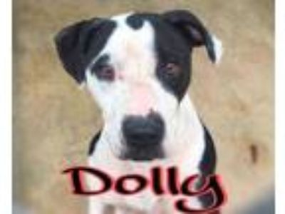Adopt Dolly a Black Hound (Unknown Type) / Mixed dog in Huntsville