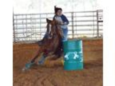 23d open 12d youth 22 second pole horse rodeo lessons and trail rides