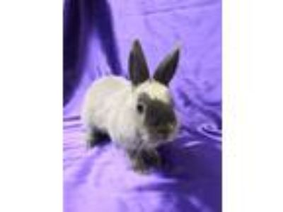 Adopt Willie a Champagne D'Argent