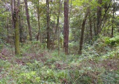 Beautiful Wooded Fairhope Lot with Views of Mobile Bay!