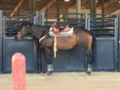 BarrelRodeo horse for sale