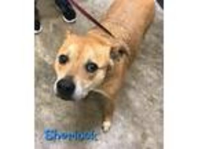 Craigslist - Animals and Pets for Adoption Classified Ads in Sherman