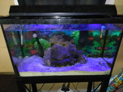 30 gallon saltwater tank
