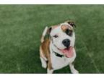 Adopt Grindelwald a Boxer