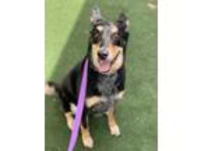 Adopt Penny a Black Mixed Breed (Large) / Mixed dog in Orlando, FL (25598920)