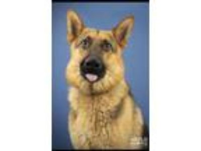 Adopt A foster or adopter needed for Kyno a Black - with Tan