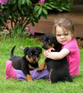 Priceless Rottweiler Puppies for Adoption